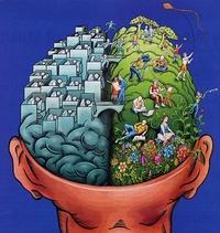 cerveau-d-g.jpg