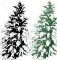 conifere-2.jpg