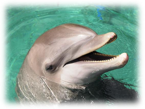 flipper-le-dauphin.jpg